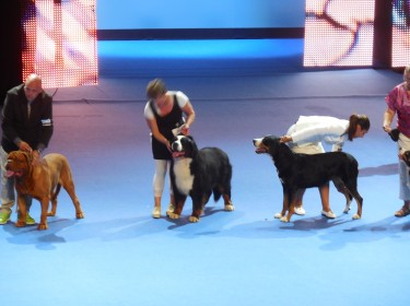 WORLD DOG SHOW FINLAND 2014-7