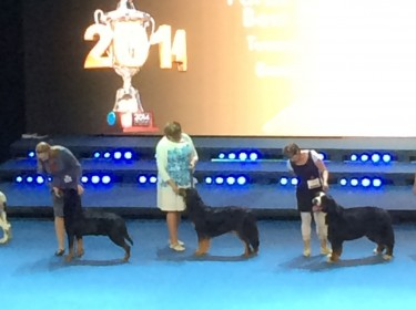 WORLD DOG SHOW FINLAND 2014-8