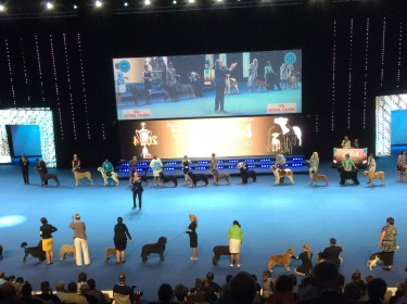 WORLD DOG SHOW FINLAND 2014-9