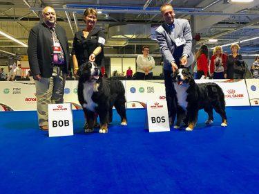 Euro Dog Show 2018 in Poland-1