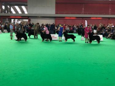 World Dog Show in Amsterdam 2018-7