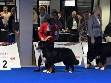 Euro Dog Show 2018 in Poland-5