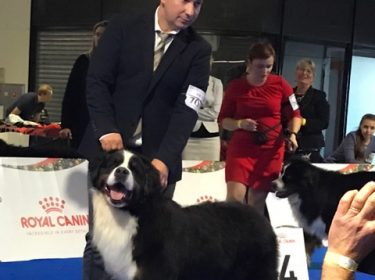 Euro Dog Show 2018 in Poland-4