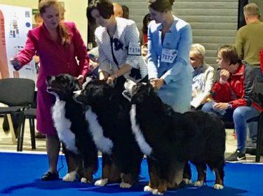 Euro Dog Show 2018 in Poland-2
