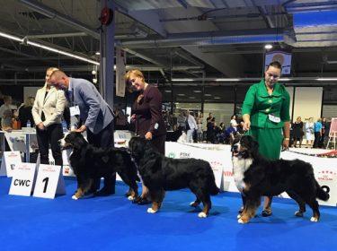 Euro Dog Show 2018 in Poland-7