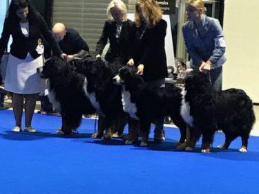 Euro Dog Show 2018 in Poland-8