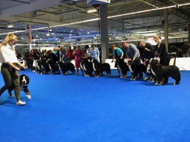 Euro Dog Show 2018 in Poland-9
