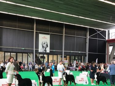 World Dog Show in Amsterdam 2018-5
