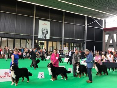 World Dog Show in Amsterdam 2018-6