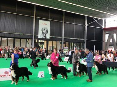 World Dog Show in Amsterdam 2018-6