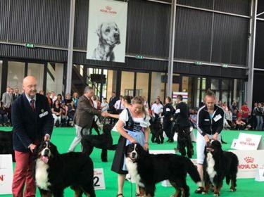 World Dog Show in Amsterdam 2018-4