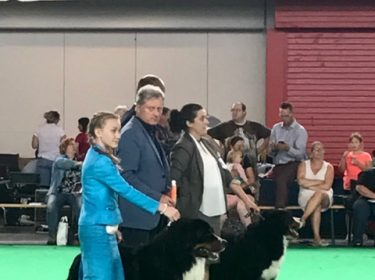 World Dog Show in Amsterdam 2018-1