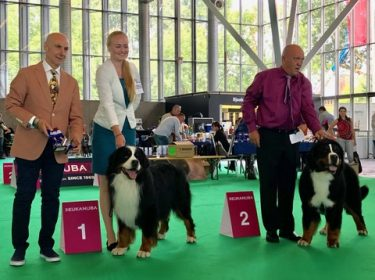World Dog Show in Amsterdam 2018-3