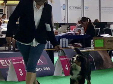 World Dog Show in Amsterdam 2018-9